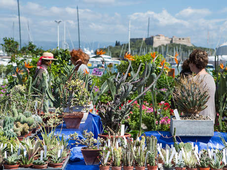 Gli Floralies d'Antibes