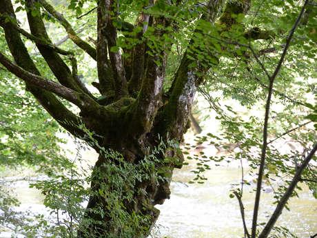 Rendez-vous Nature & Environnement
