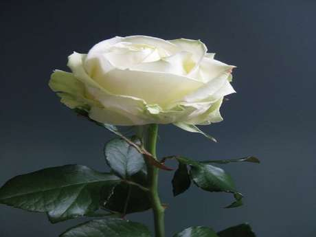 """Cours floral """"ne te découvre pas d'une fleur"""""""