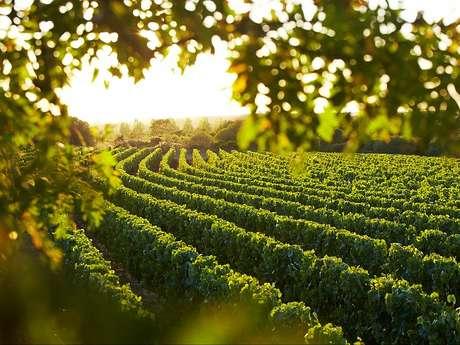 Routes des vins 'Terroir de Brem sur Mer'
