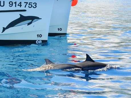 Zarlor Rendez-vous avec les cétacés en bateau - Croisière Safari