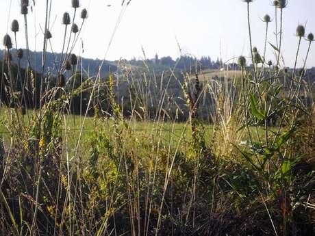 Autour du Puy Turlau