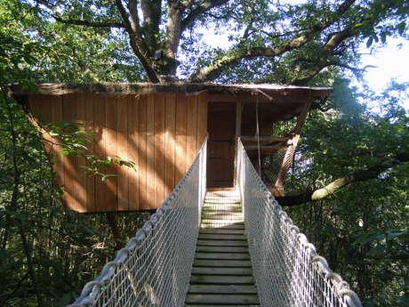 Les Ecolodges : les Cabanes du Bois