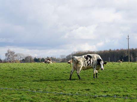 La ferme Bio Moranfayt