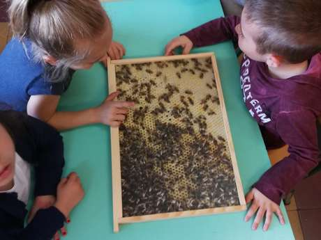 Discovering the world of bees