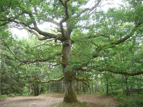 Circuit de randonnée : La forêt de Drouille