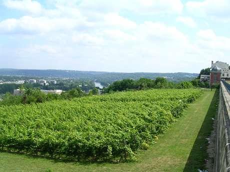 Vignes de Saint-Germain-en-Laye / Le Pecq