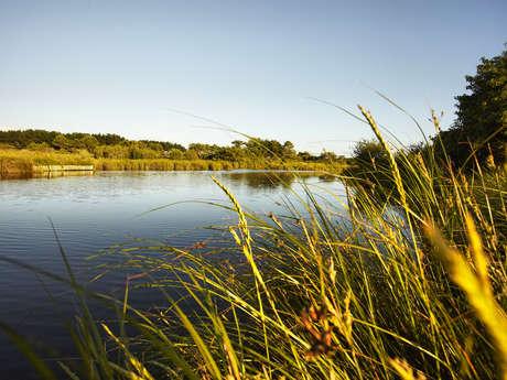 Le polder et la dune de Mousterlin