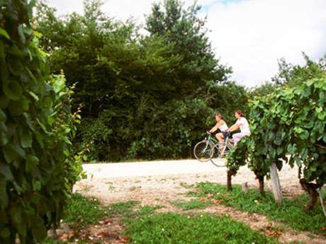 Itinéraire 13 - Terroir de Sologne - Sologne à Vélo