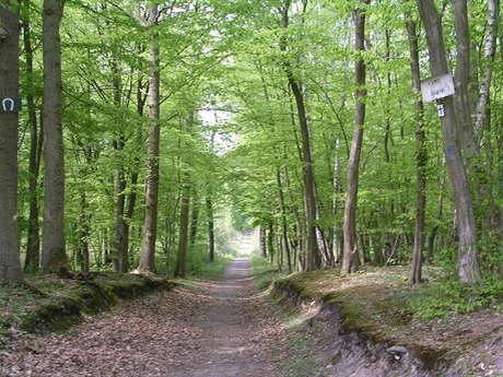 Itinéraire pédestre en forêt de Saint-Germain-en-Laye