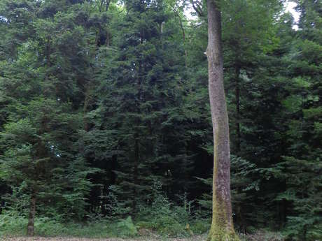 Parcours Forestier