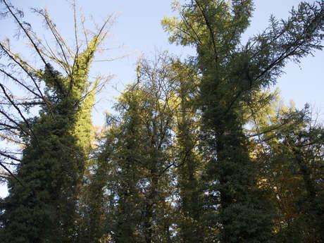Havré Forest