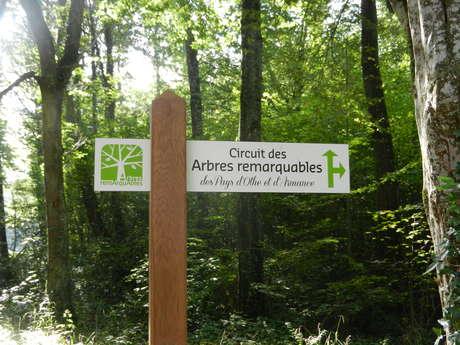 Circuit des arbres remaquables