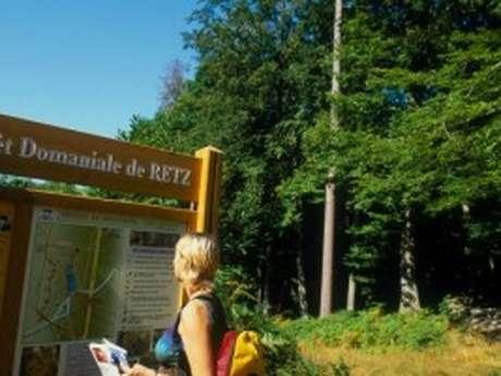A la découverte de la biodiversité printanière en forêt de Retz