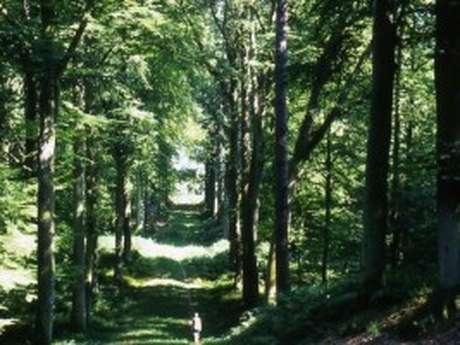 Marche santé en forêt de Retz