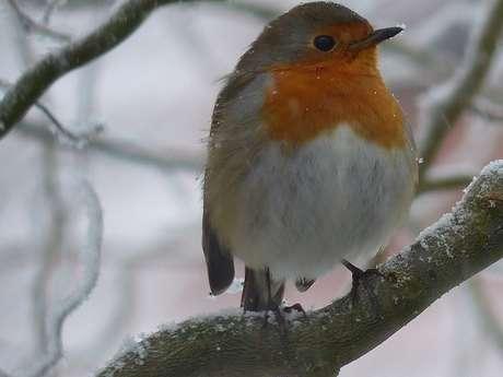 Trucs et astuces pour aider les oiseaux à affronter l'hiver
