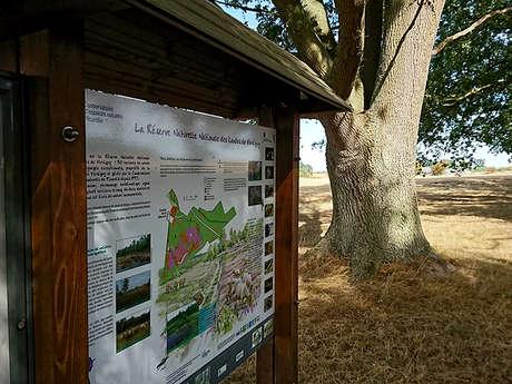 """Sortie nature : """"Incroyables plantes sauvages des landes de Versigny"""""""