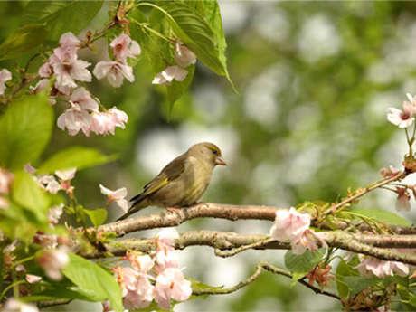 """Sortie nature à Laon : """"Les oiseaux de la ville"""""""