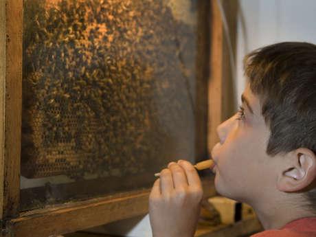 """Visite audioguidée à Chavignon : """"Le monde merveilleux de Zaza l'abeille"""""""