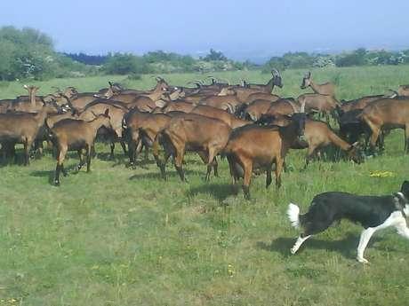 GAEC La Chèvre de Russilly