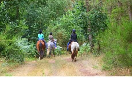 Cheval Brocéliande - Centre équestre