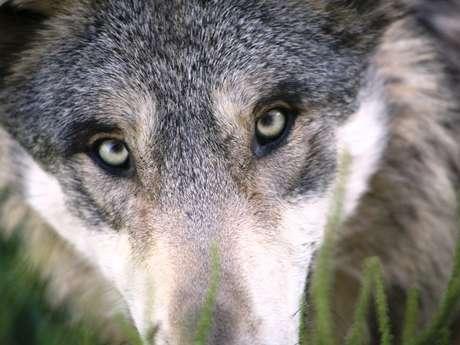Randonnée contée: Entre diable et loup
