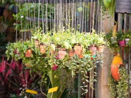 Atelier jardin: Les carottes préfèrent les radis