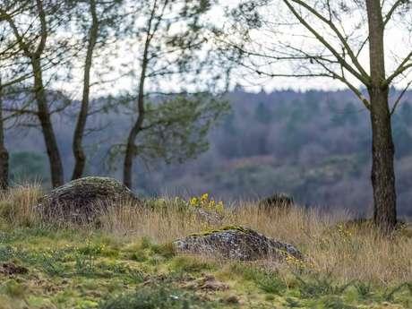 Randonnée contée en Brocéliande : le val sans retour et les landes de Gurwan