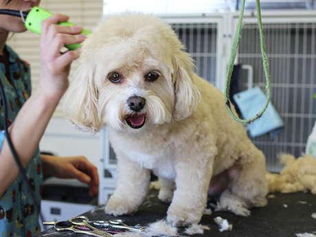 LAGNIEL Nathalie - Toilettage canin à domicile