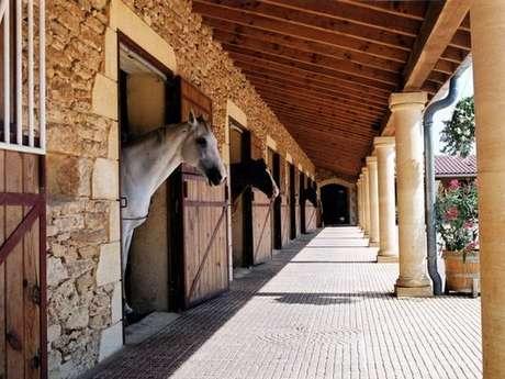 Eté actif 2020 : Balade Equestre