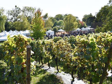 Chartres et ses vignobles