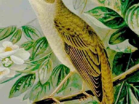 Arts en scène : Les oiseaux, nos maîtres-chanteurs