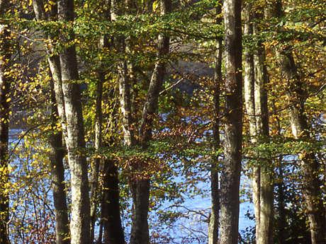 Forêt domaniale de Senonches - Les ronds de la forêt