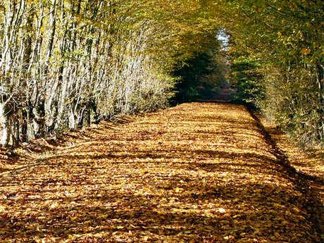 Forêt domaniale de Senonches - Circuit nature