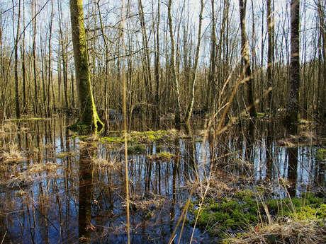 Forêt humide des Mousseuses - Copie