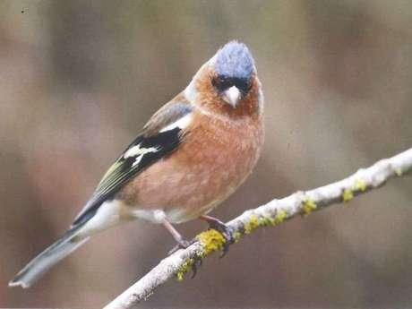 Observation des oiseaux avec Eure-et-Loir Nature