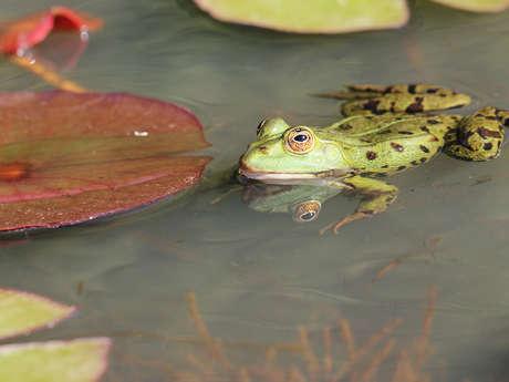 Découverte des amphibiens de la mare du bois des Gâts