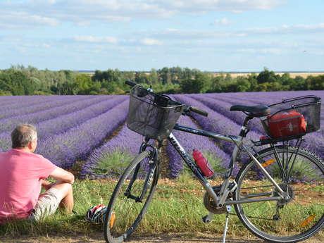 """Point de location vélos  """"Office de Tourisme Châteaudun"""""""