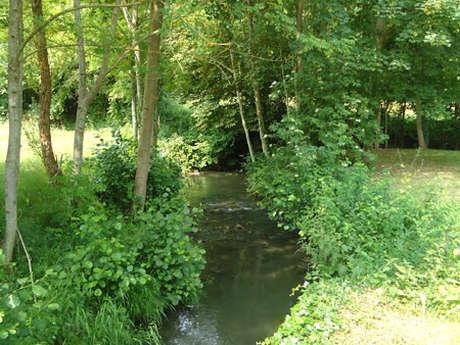 Pêche en rivière 1ère catégorie : La Ronne