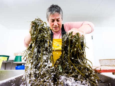 Atelier cuisine des algues par Scarlette Le Corre
