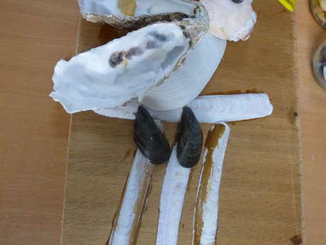 Atelier créatif autour du coquillage