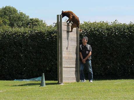Concours Canin en ring