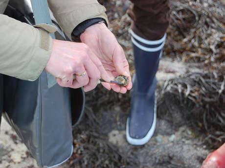 Initiation à la pêche à pied