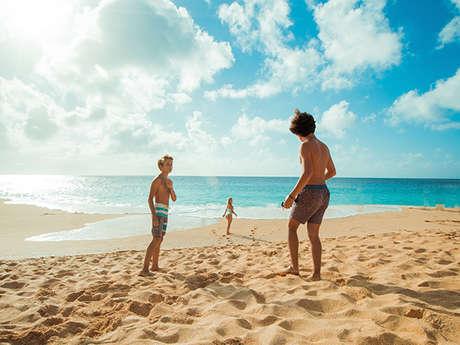 Concours de châteaux de sable - Animaux marins