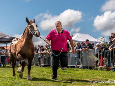 Foire aux chevaux du Menez Bré