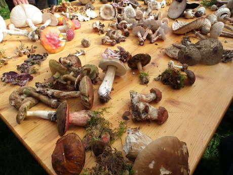 Sortie champignon