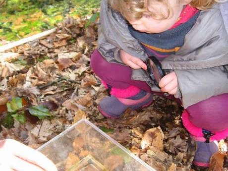 Le petit peuple des feuilles
