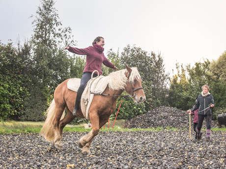 Découverte du cheval pour adulte