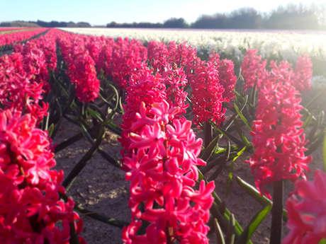 Mosaïque en fleurs de jacinthes