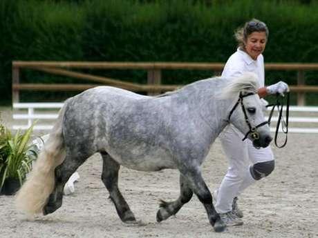 Concours de saut d'obstacles poney